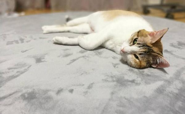 <span>抜け毛に悩む、猫ちゃんと暮らすお部屋に</span>猫の細い毛が絡まらずに、お掃除がしやすいフカフカラグ♪