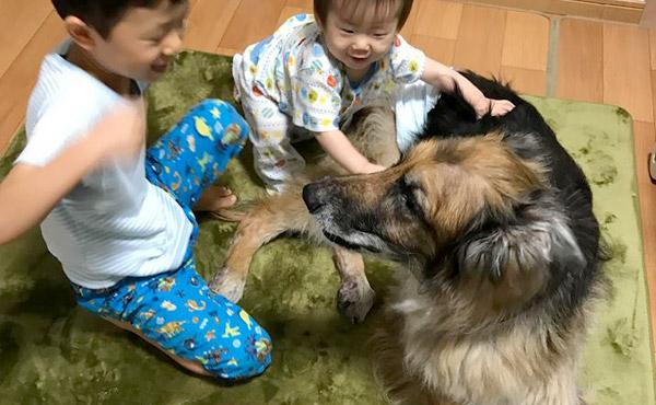 <span>おじいちゃん犬の足腰の負担軽減に</span>老犬になるとどうしても弱ってきてしまう足腰。ほんのちょっと足腰をお手伝いしてくれる、高反発ラグ