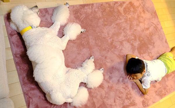 <span>柔らかいところで寝るのが大好きなワンちゃんに</span>クッション性の高いラグで、老後の足腰対策にも。