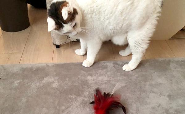 <span>ねこ様4頭多頭飼い!抜け毛、吐きもどし、老ネコの足腰・・・</span>様々な課題を抱えたご家庭におすすめのラグは??