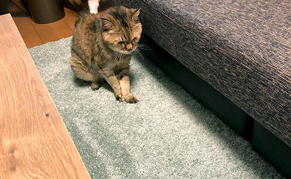 <span>おトイレを失敗するようになってしまったおばあちゃん猫に</span>失敗してもイイヨ、という気持ちを込めて、丸洗いできるラグ