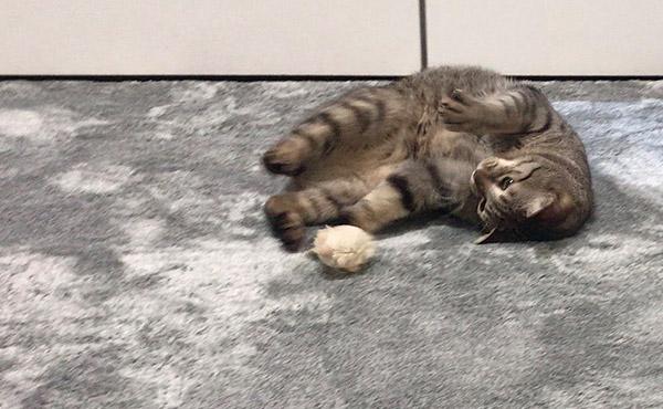 <span>毛足は少し長め。でも掃除がラクで、自宅で洗えるラグ</span>猫さん2匹の抜け毛の掃除も楽々な、お手入れ簡単ラグ
