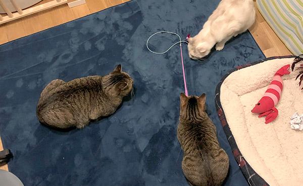 <span>保護猫さんの快適生活に</span>掃除がしやすく、高齢猫さんも安心のクッション性がある高反発ラグ