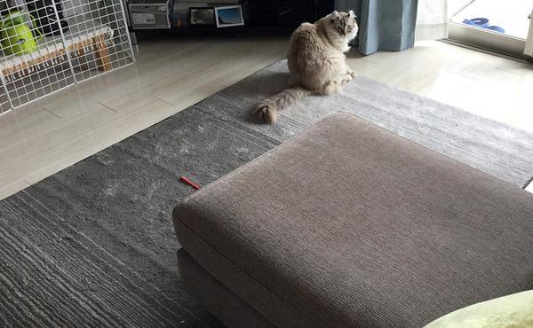 <span>毛が入り込まないから、長毛猫さんの毛もお掃除楽々</span>お部屋にも猫さんの毛並みにもマッチしたデザインとカラーもすてき。