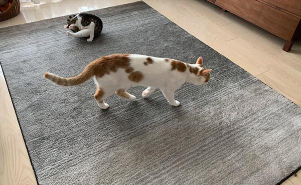 <span>ダイソンでスッキリ!軽量なので持ち運びもラクチン♪</span>2匹の猫も、飼い主さんもゆったりできる空間づくり