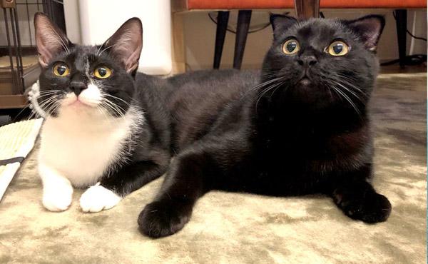 <span>やんちゃな2匹のフローリング対策&爪とぎ対策に!</span>保護猫2匹が、日に日に慣れてたくさん遊んでくれるのはいいんだけど…??