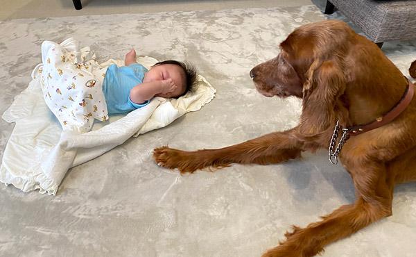 <span>小さな赤ちゃんにも、老犬の足腰にも優しい高反発ラグ</span>柔らかすぎず、沈みすぎない高反発なので立ち上がるのもラクになります!